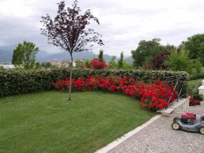 Opere in Verde Garden Gardenia